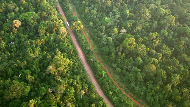 floresta-meio-ambiente-foto-aerea-mata-sustentabilidade-estada-aquecimento-global-efeito-estufa (Foto: Ana Cotta/CCommons)