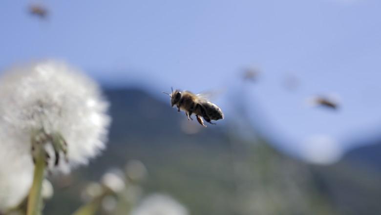 abelha-polinização-mel-apicultura-desaparecimento (Foto: Divulgação)