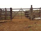Polícia Civil investiga furtos de gado em propriedades da Zona da Mata