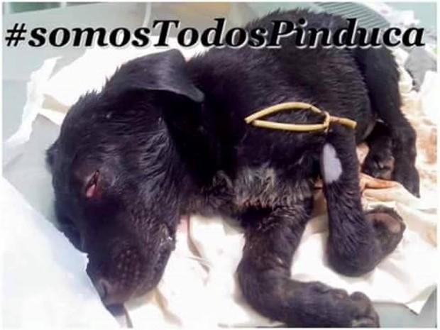 Pinduca, filhote de cachorro agredido em Pitangui (Foto: Luciene Resende/Arquivo pessoal)