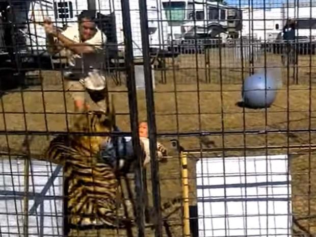 Imagem de vídeo mostra tigre arrastandp treinadora durante apresentação em feira de entretenimento na Flórida (Foto: Reprodução/ YouTube/ Scott Caputo)