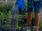 Mulheres se unem para preservar e reflorestar a caatinga em Pernambuco
