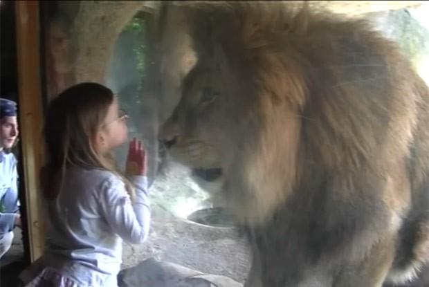 Menina beijou 'jaula' de leão, mas levou susto com reação de animal (Foto: Reprodução/Reddit/Namraka)