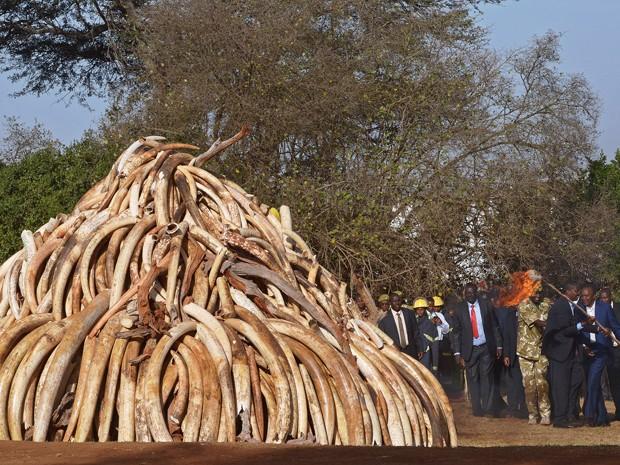 O presidente queniano Uhuru Kenyatta segura uma tocha enquanto se prepara para atear fogo a 15 toneladas de presas de elefantes, apreendidas com traficantes de marfim, no Parque Nacional de Nairobi, na terça (3) (Foto: AFP Photo/Carl de Souza)