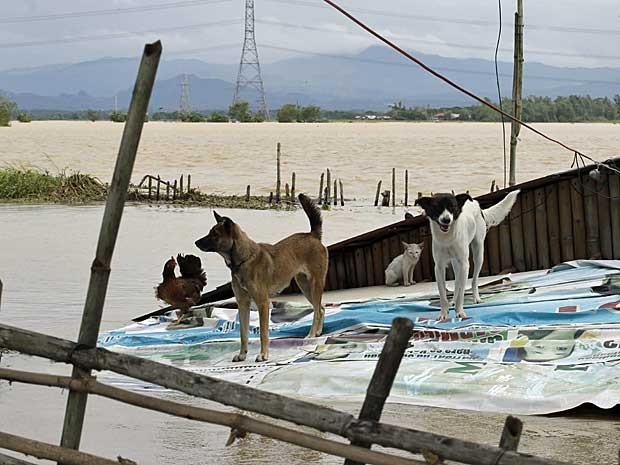 Cães, um gato e uma galinha dividem o telhado de uma casa cercada pelas águas de inundações provocadas pelo tufão 'Nari' em Bulacan, ao norte de Manila, nas Filipinas. (Foto: Bullit Marquez / AP Photo)