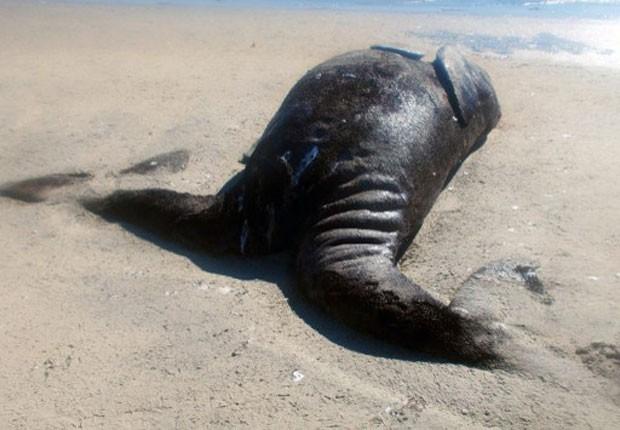 Biólogos afirmam que exemplares como o encontrado na costa mexicana são raríssimos (Fot Conanp/AFP)