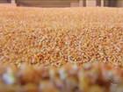 Produção global de grãos deve cair 1,3% em 2015, diz FAO