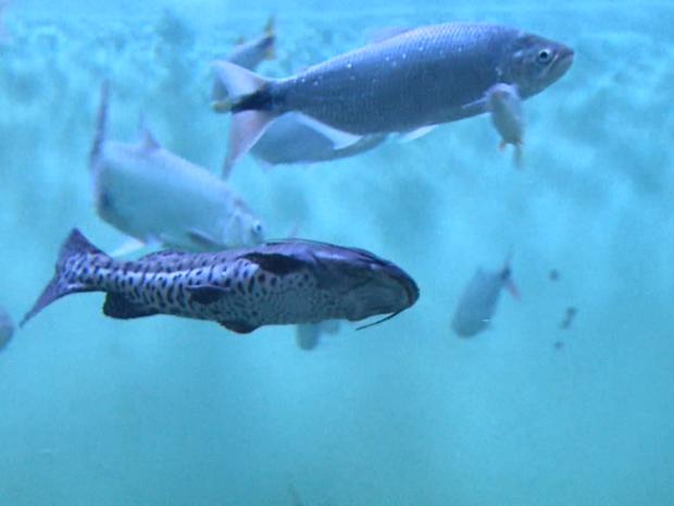 Aquarios têm mais de mil peixes de 56 espécies diferentes em Ribeirão Preto (SP) (Foto: Reprodução/EPTV)