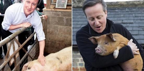 Cameron com porcos
