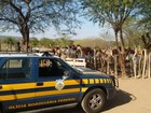 Mais de 100 animais são capturados pela PRF nas rodovias do Sertão