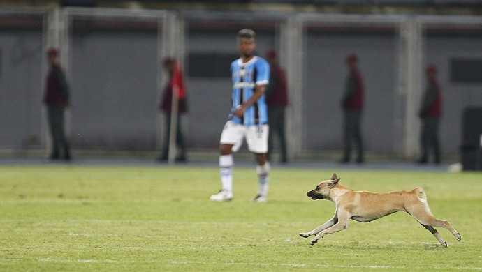 Cachorro invade campo durante Zamora x Grêmio (Foto: Lucas Uebel / Grêmio, DVG)