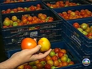 Preço do tomate não para de subir (Foto: Reprodução/TV Globo)