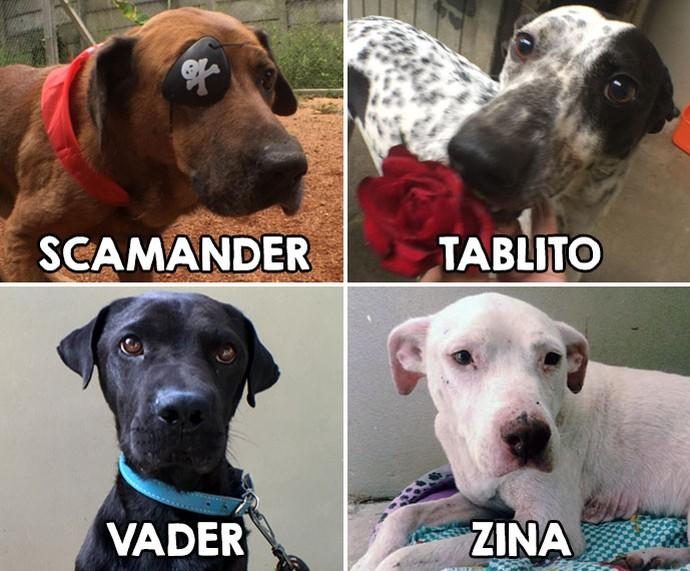 mistura com rodaika patas dadas cachorros adoção (Foto: Divulgação/ONG Patas Dadas)