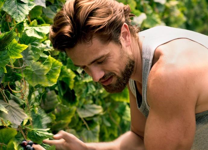 Felipe colhe as uvas em sua vinícola (Foto: TV Globo)