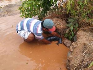Morte de peixes (Foto: Tiago Lopes / Intertv dos vales)