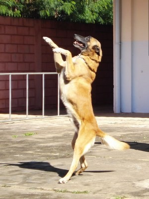 Aquiles brinca durantes apresentação (Foto: Divulgação/Polícia Militar)