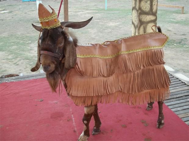 O bode Tartaruga é o rei desta edição da festa (Foto: Rafael Melo/G1)