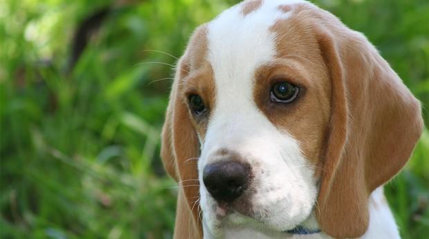 Brasil já é o segundo maior consumidor mundial de produtos e serviços para pets (Foto: Photopin)