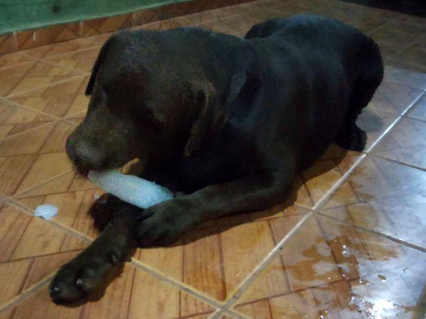 Toddy, como cão é chamado, gosta de chupar gelo no período da tarde (Foto: Fátima de Souza/Arquivo Pessoal)