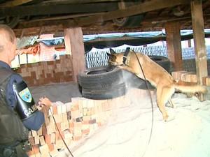 Cães farejadores ajudaram a encontrar a droga (Foto: Reprodução/EPTV)