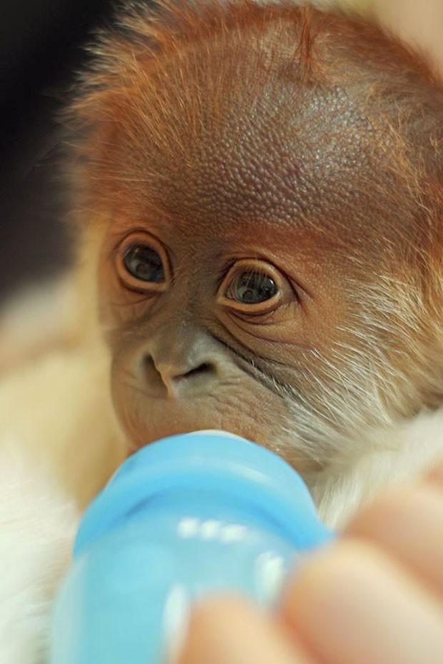 Filhote agora se alimenta com mamadeira (Foto: Zoológico de Berlim/Divulgação)