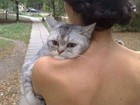 'Gato aborrecido' vira hit ao ser fotografado no ombro de dona