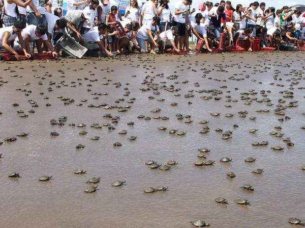 Em Afuá, no Pará, área protegida pelo Ibama do Amapá, foram soltos mais de 100 mil quelônios (Fot Eliazar Bezerra/Ibama)