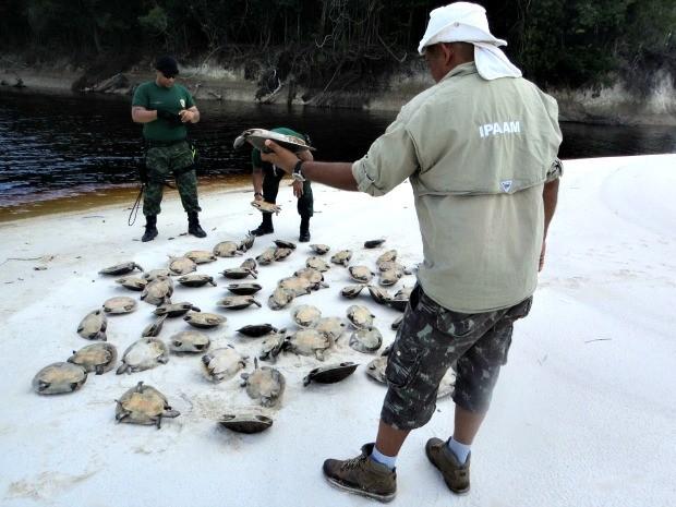 Operação foi realizada para combater pescado ilegal  (Foto: Divulgação/ Ipaam)