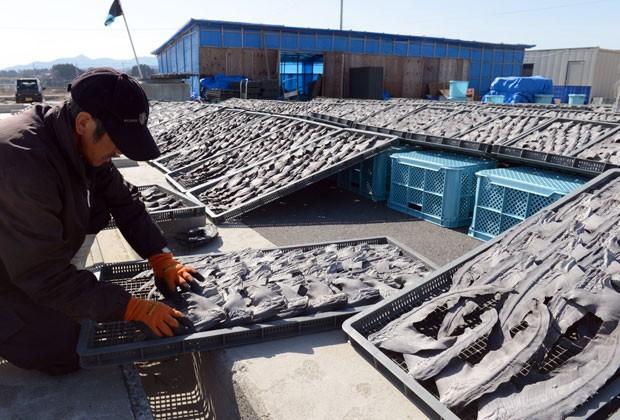 Foto mostra pescador secando partes de tubarões no Japão em março de 2013 (Foto: Toshifumi Kitamura / AFP)