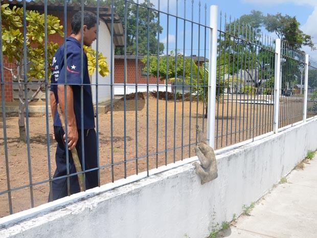 Um bicho-preguiça foi encontrado na manhã desta terça-feira (6) tentando pular o muro do campus I da Universidade Federal da Paraíba em João Pessoa. (Foto: Walter Paparazzo/G1)