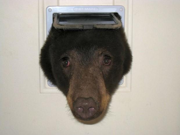 Doug Harder fotografou urso tentando entrar em sua casa por portinhola para gatos (Foto: Reprodução/Facebook/Doug Harder )