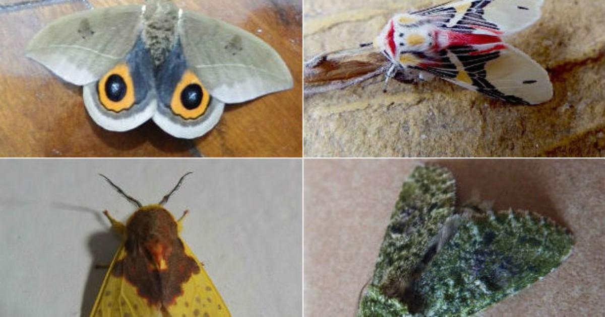 Morador do Paraná coleciona fotos de mariposas e borboletas coloridas