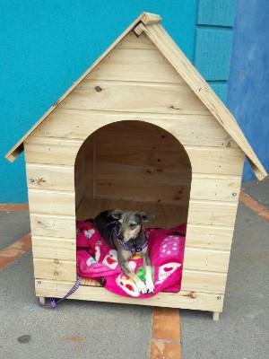 Filha é modelo de pet shop em Jardim (MS) (Foto: Tharyana Durigon/ Arquivo Pessoal)