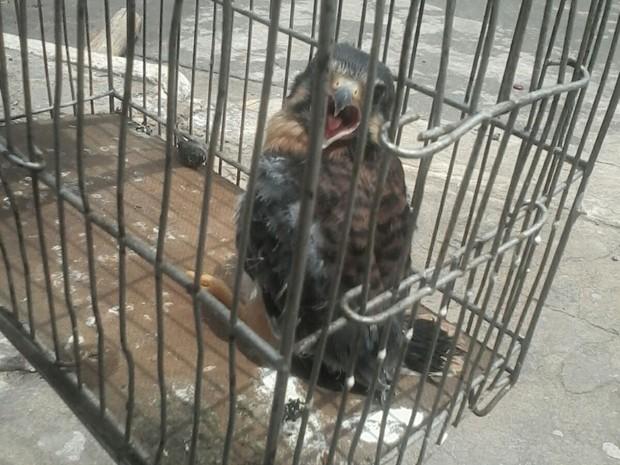 Filhote de gavião foi encontrado em casa na Serra (Foto: Auzely Souza/ Arquivo Pessoal)