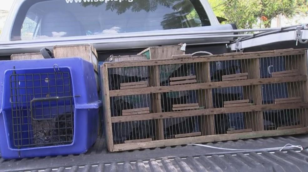 Animais foram soltos em uma reserva ambiental de Cerquilho (Foto: Reprodução/TV TEM)