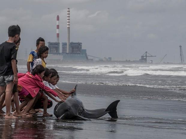 Crianças tentam ajudar um golfinho que ficou preso à areia de uma praia em Cilacap, em Java Central, Indonésia, após uma forte tempestade com maré cheia (Foto: Idhad Zakaria/Antara/Reuters)