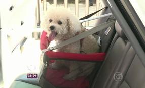 Adestrador dá dicas de segurança para o transporte de cães em carros