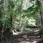 Mogi das Cruzes tem reservas ambientais certificadas