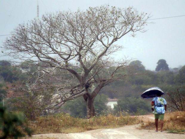 Apesar do volume de precipitações últimas 24 horas, chuvas não devem continuar no interior (Foto: Canindé Soares/G1)
