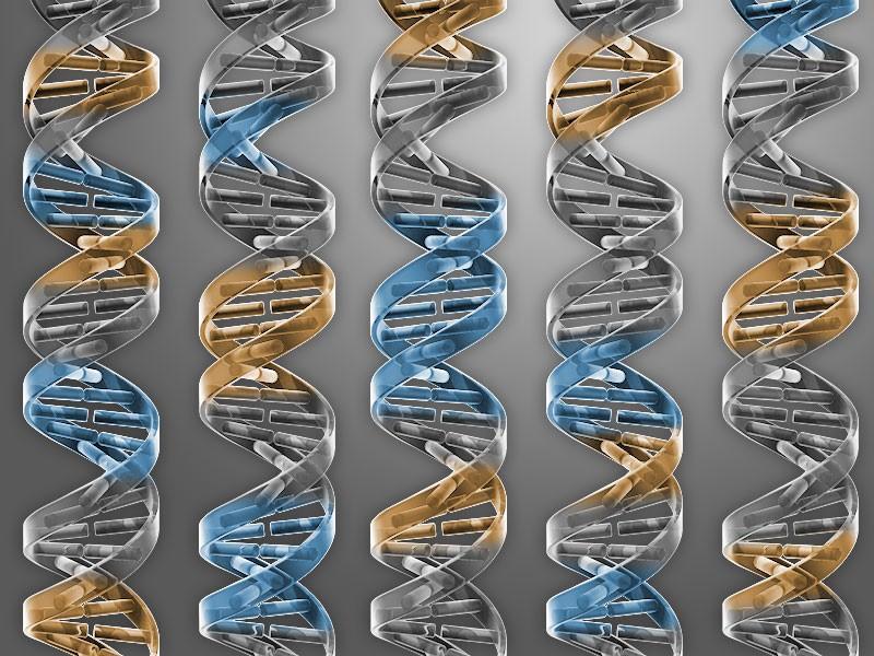 Uma nova bactéria, inventada pelo homem, pode dar pistas de como a vida funciona