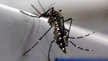 Sobem 69% suspeitas de Chikungunya (Paulo Whitaker/Reuters)