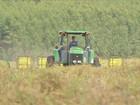 Produtores de soja aproveitam a chuva para retomar o plantio em MS