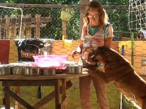 Mulheres fazem mutirão para cuidar de animais (Foto: Reprodução/TV TEM)