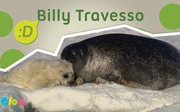 Billy Travesso