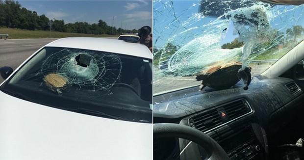 Americana dirigia em estrada na Flórida quando teve para-brisa atingido por tartaruga (Foto: Reprodução/Facebook/Nicole Marie Bjanes)
