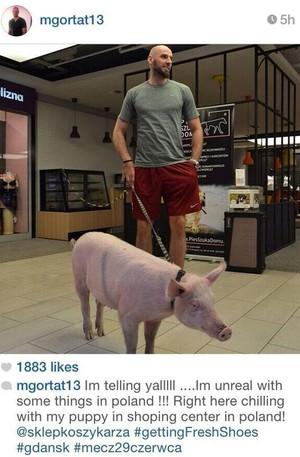 Basquete Marcin Gortat e seu porco (Foto: Reprodução / Instagram)