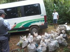 Caranguejos apreendidos foram levados de volta ao mangue. (Foto: Divulgação/Polícia Ambiental)