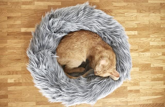 Capello Cat Bed, MiaCara Design (€99) (Foto: Reprodução)