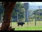 Fazenda em Uberaba é citada em denúncias de corrupção na Lava Lato