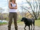 Cadela labrador salva dona de ataque de urso nos EUA